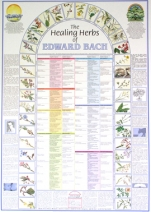 The Healing Herbs Of Edward Bach – Laminated Poster