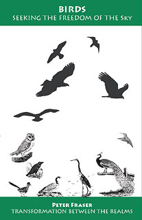 Birds, Seeking the Freedom of the Sky