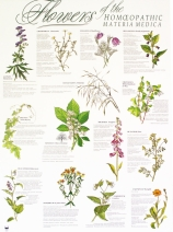 Flowers of the Materia Medica – Poster