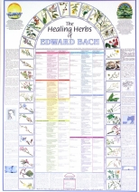 The Healing Herbs of Edward Bach – Poster
